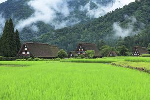 世界文化遺産 夏の白川郷合掌造り集落の写真素材 [FYI04581862]