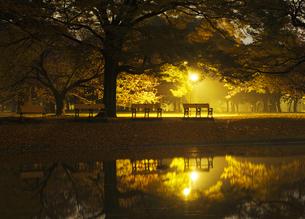夜明け前の代々木公園の写真素材 [FYI04581891]