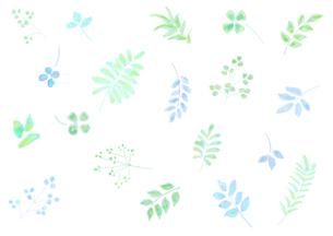 植物のパターンのイラスト素材 [FYI04581995]