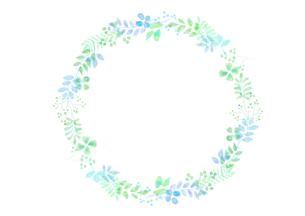 植物の飾り罫のイラスト素材 [FYI04581996]