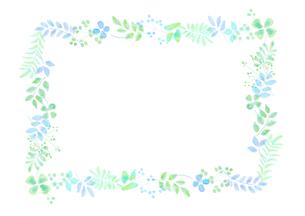 植物の飾り罫のイラスト素材 [FYI04581997]