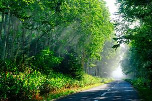 霧の森と道路の写真素材 [FYI04582140]