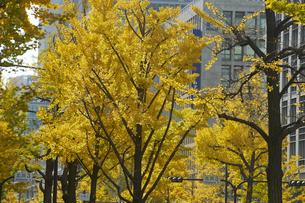 秋の御堂筋の写真素材 [FYI04582162]