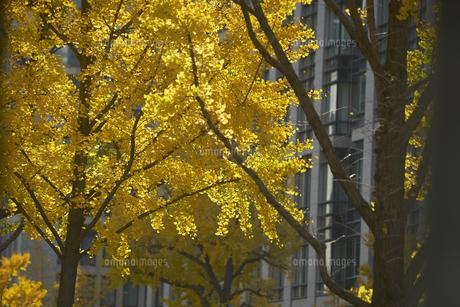 秋の御堂筋の写真素材 [FYI04582167]