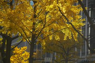 秋の御堂筋の写真素材 [FYI04582168]