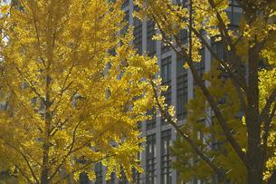 秋の御堂筋の写真素材 [FYI04582172]