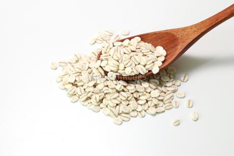 白バックの胚芽押麦の写真素材 [FYI04582440]