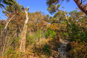 秋のえびの高原 登山道 宮崎県えびの市の写真素材 [FYI04582472]