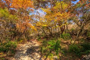 秋のえびの高原 登山道 宮崎県えびの市の写真素材 [FYI04582473]