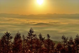 雲海と木々と日の出の写真素材 [FYI04582595]