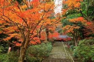 秋の室生寺 紅葉の鎧坂と金堂の写真素材 [FYI04582599]