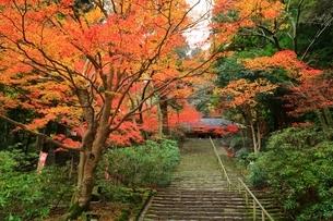 秋の室生寺 紅葉の鎧坂と金堂の写真素材 [FYI04582600]