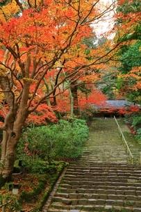 秋の室生寺 紅葉の鎧坂と金堂の写真素材 [FYI04582601]