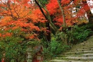 秋の室生寺 紅葉の鎧坂の写真素材 [FYI04582602]