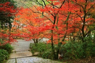 秋の室生寺 紅葉の鎧坂の写真素材 [FYI04582604]