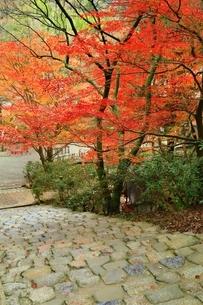 秋の室生寺 紅葉の鎧坂の写真素材 [FYI04582605]
