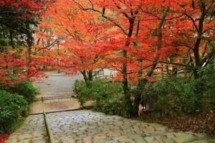 秋の室生寺 紅葉の鎧坂の写真素材 [FYI04582606]