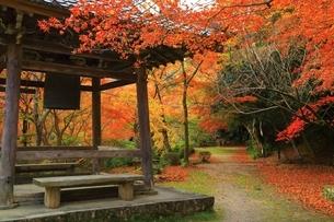 京都・西山 紅葉の勝持寺の写真素材 [FYI04582657]