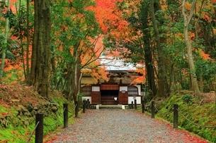 京都・竹の寺 秋の地蔵院の写真素材 [FYI04582717]