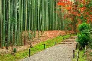 京都・竹の寺 秋の地蔵院の写真素材 [FYI04582720]