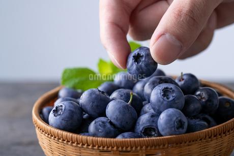 Man pick fresh ripe blueberries.の写真素材 [FYI04582826]