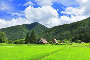 世界文化遺産 夏の白川郷合掌造り集落の写真素材 [FYI04583248]