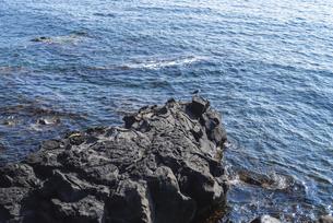 寝熊の岩の写真素材 [FYI04583283]