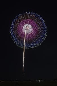いばらきまつり フィナーレ花火の写真素材 [FYI04583833]
