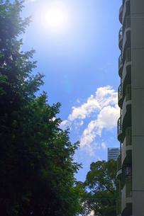 マンションと街路樹の写真素材 [FYI04584048]