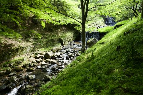 森の中に流れる上流の川の写真素材 [FYI04584725]