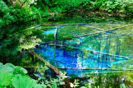 神の子池の写真素材 [FYI04584984]
