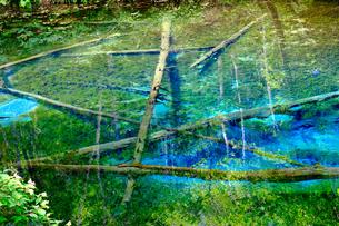 神の子池の写真素材 [FYI04584985]