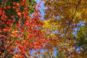 秋のえびの高原 紅葉 宮崎県えびの市の写真素材 [FYI04584990]
