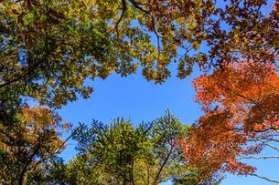 秋のえびの高原 紅葉 宮崎県えびの市の写真素材 [FYI04584992]