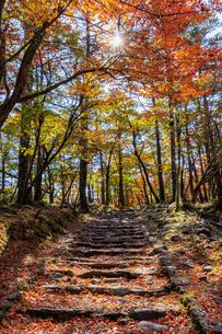 秋のえびの高原 登山道 宮崎県えびの市の写真素材 [FYI04584993]