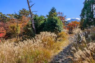 秋のえびの高原 登山道 宮崎県えびの市の写真素材 [FYI04584996]