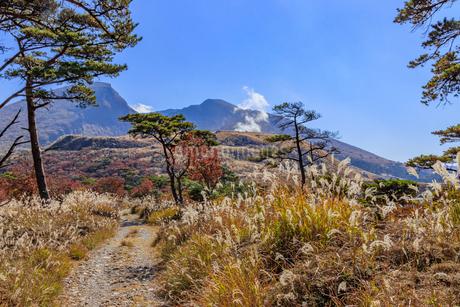 秋のえびの高原 韓国岳と登山道 宮崎県えびの市の写真素材 [FYI04584997]