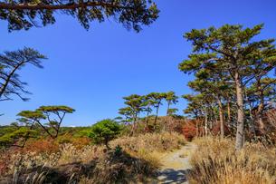 秋のえびの高原 登山道 宮崎県えびの市の写真素材 [FYI04585002]