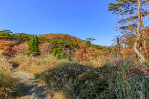 秋のえびの高原 登山道 宮崎県えびの市の写真素材 [FYI04585010]