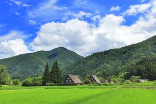世界文化遺産 夏の白川郷合掌造り集落の写真素材 [FYI04585293]