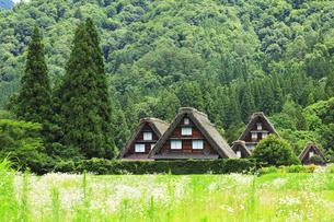 世界文化遺産 白川郷合掌造り集落の写真素材 [FYI04585301]