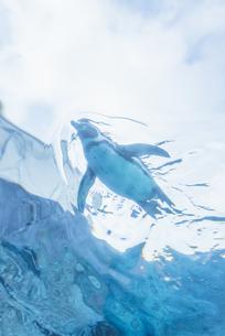 舞うペンギンの写真素材 [FYI04585394]
