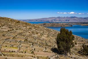 チチカカ湖の段々畑の写真素材 [FYI04585406]