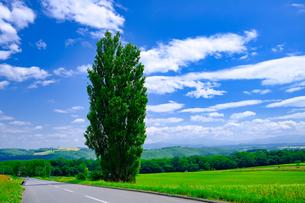 ケンとメリーの木の写真素材 [FYI04585723]