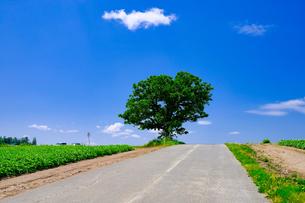 セブンスターの木の写真素材 [FYI04585725]