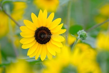 夏のイメージの写真素材 [FYI04585890]