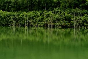 王滝村自然湖の写真素材 [FYI04586434]