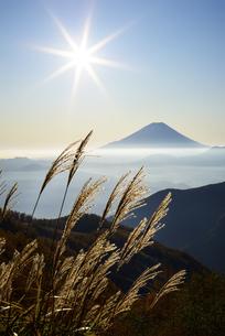 山梨県 太陽に照らされるススキと富士山の写真素材 [FYI04586511]