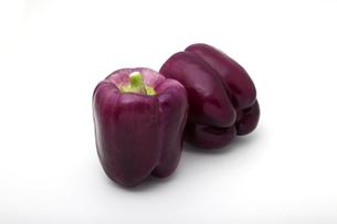 白い背景に紫のパプリカの写真素材 [FYI04586531]