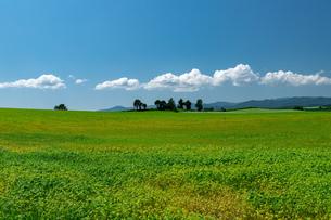 北海道 美瑛町の夏の風景の写真素材 [FYI04586826]